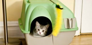 Top 10 Best Cat Houses and Condos Reviews
