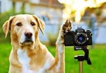 Top 10 Best Dog Camera and Monitors Reviews