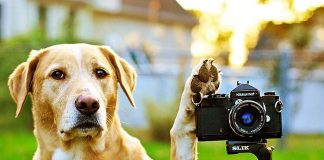 Top 10 Best Dog Camera and Monitors Reviews