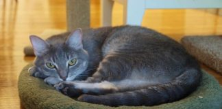 Top 8 Best Cat Beds Reviews