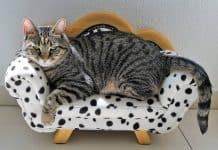Top 8 Best Cat Sofa Reviews