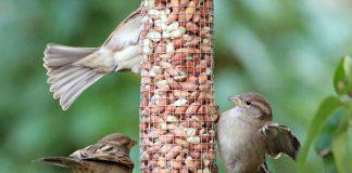 best bird food