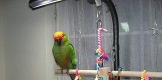 best bird toy