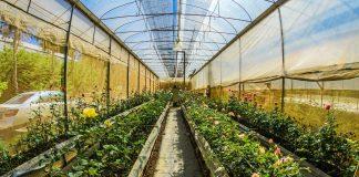 best grow tents for indoor plant growing